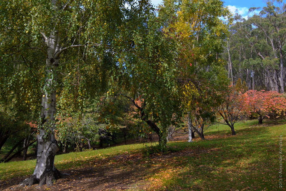 Mount Lofty Botanic Garden