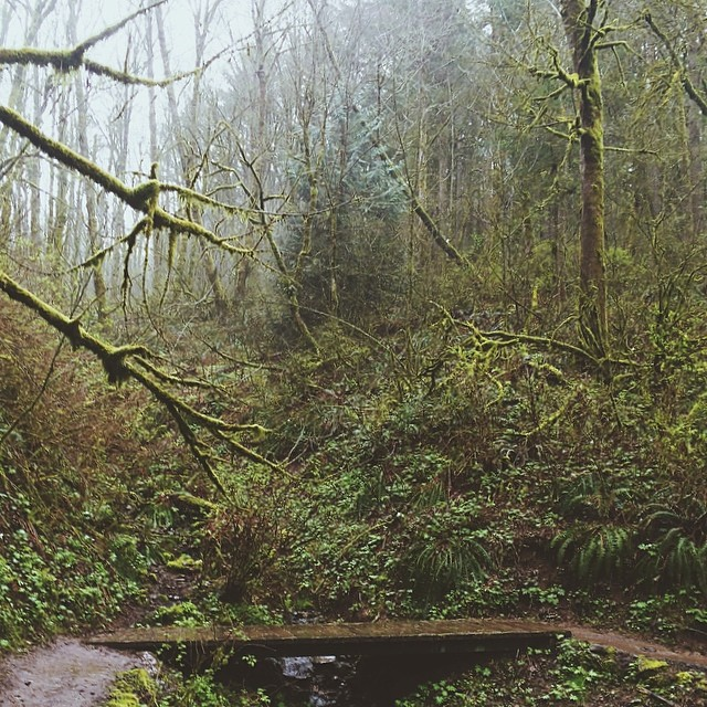 I loved the hike we went on Saturday so much so that I decided to return and trail run the entire 10.25 miles of it today in about 2 hours. It was the most magical experience... it was like a lush, green pixie fairy forest out there. Despite the rain and