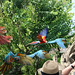 Macaw parrots in flight by greyloch