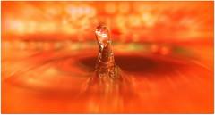 MACRO MONDAYS   :   '  Intentional  Blur  ' by Chris10 H.