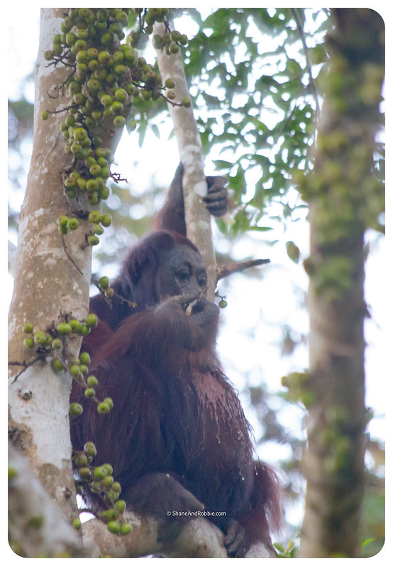 Borneo-20170410-_MG_7419