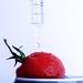 tomato wet