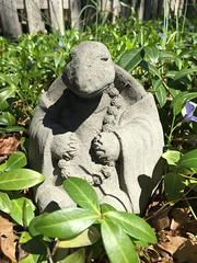 meditating turtle