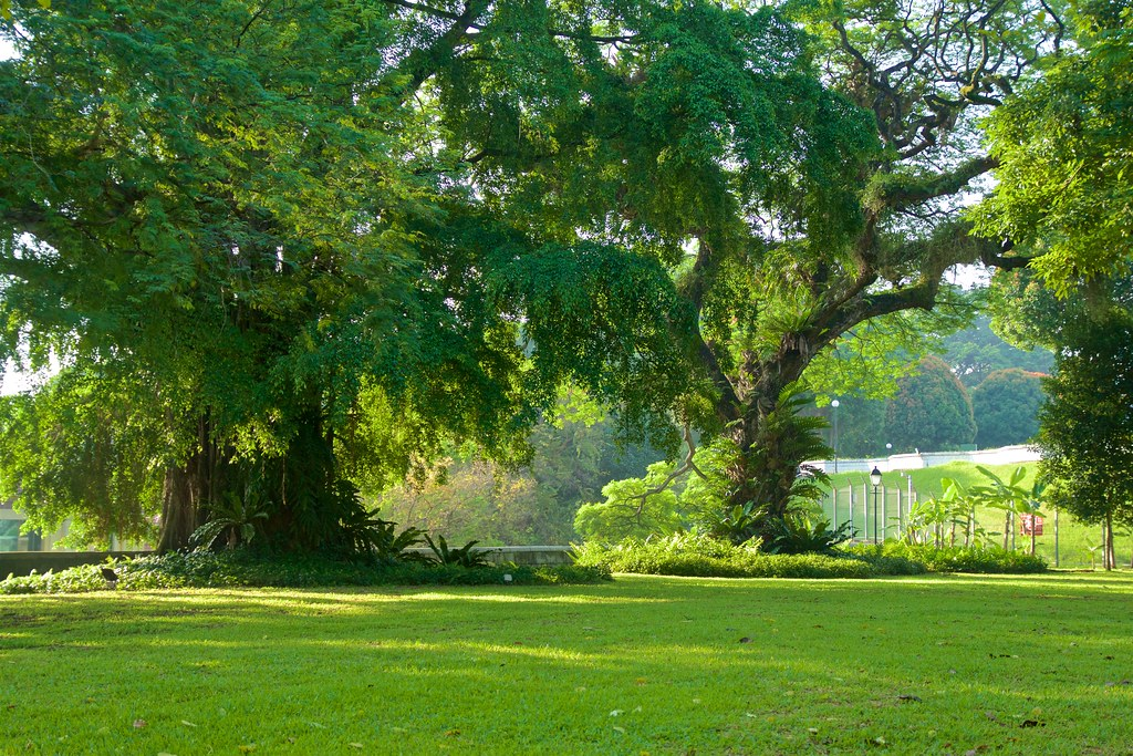 Trees in Fort Canning Park in Singapore in the morning