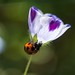 Ladybug #1
