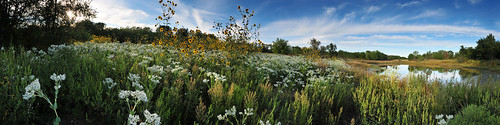 autumn panorama sunflower kansas common wichita snowonthemountain chisholmcreekpark