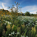 Wildflower Panorama by NaturalLight