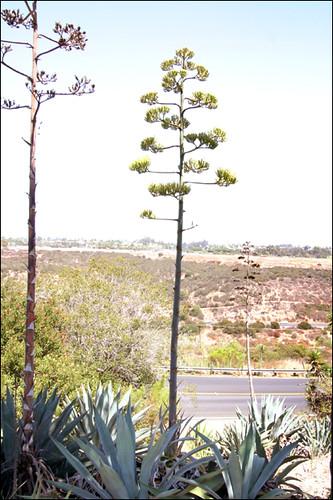 Balboa Native Gardens