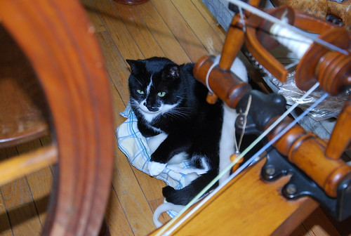Melvin occupies Columbia wool basket with Cadorette Canadian Production spinning wheel
