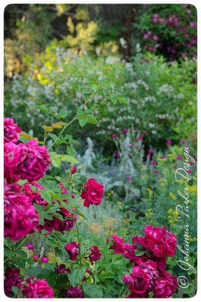 Summer-Garden-Roses
