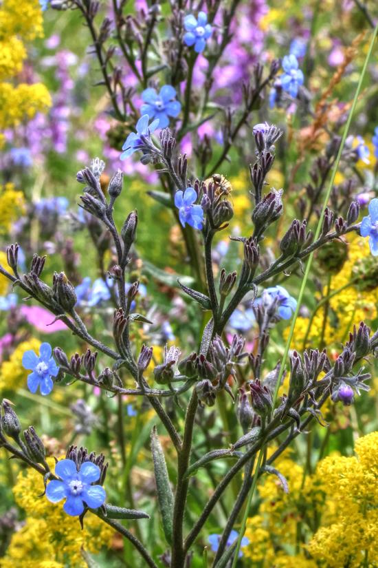 fioritura 37