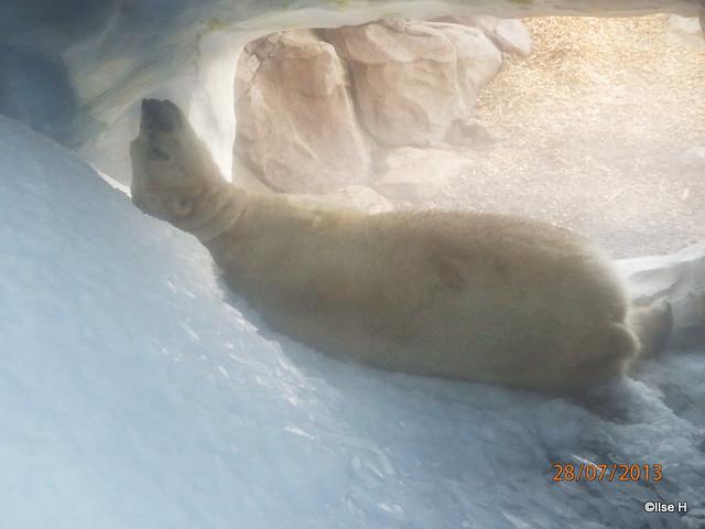 56-Raspi schläft heute in der Eisgrotte