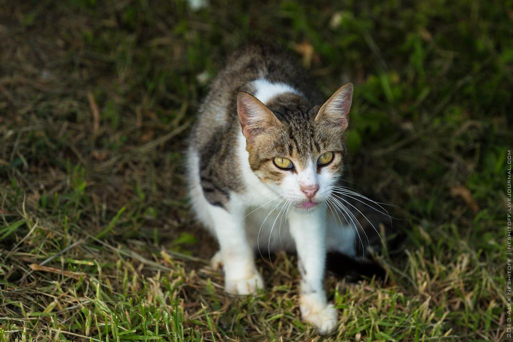 2013-Spain-Benidorm-CatsParadise-008