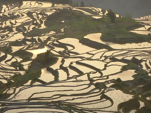 Yunnan13-Yuanyang 1-Duoyishu (71)