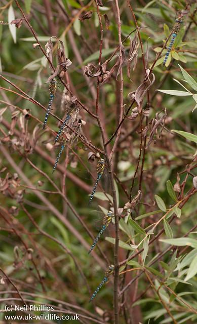 migrant hawkers swarm 2