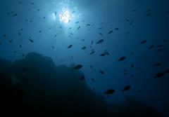 Diving Garajau Nature Reserve Madeira