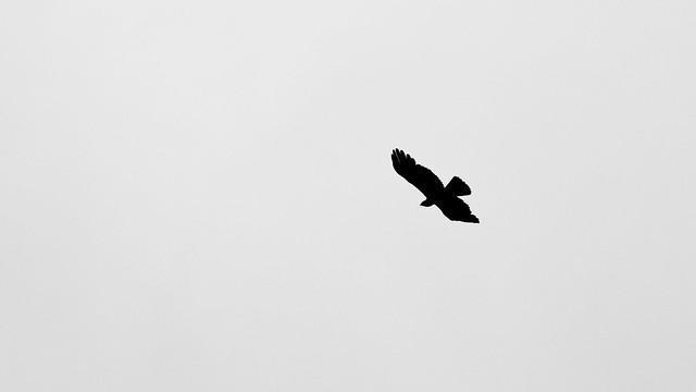 Fly Fly Away