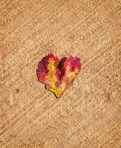 autumn fall leaves heart