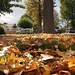 Fall Arrives in the San Fernando Valley 2013 - 25