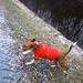 Small photo of Fern Canal Romp