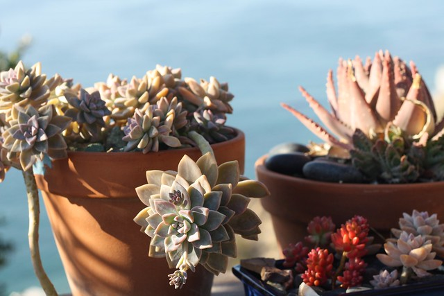 Succulents are breeding!