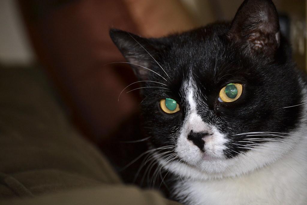 C-Cat  8/365
