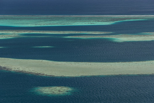 flowers tahiti reef tropicalgarden vaipahi ataiti thewatergardensofvaipahi