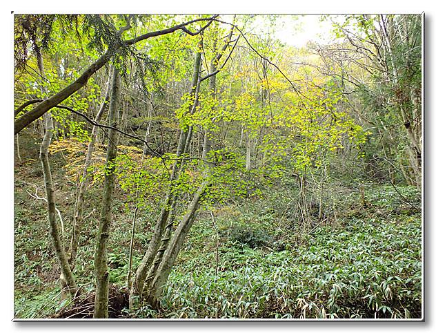 川の上に張り出した樹木.観察場所からは少し離れていたが,このような樹木があることが,ゴギにとって重要.