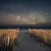 Dreamers by Jack Fusco