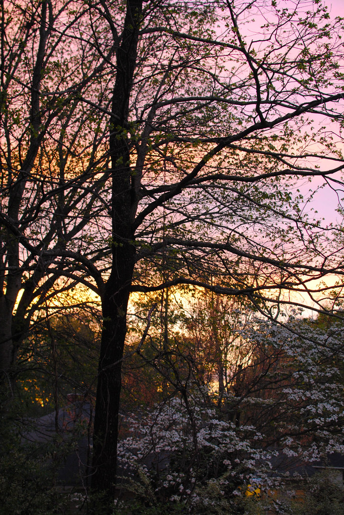 [97/365] Sunset on the Patio