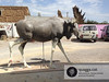 Moose > Making-of by Quagga Sculpture