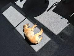 sleeping dogs laid IMG_20170421_140915