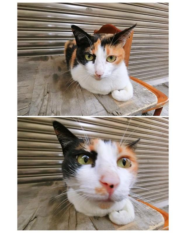 catsvr343w
