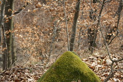 Mossy stone in woods