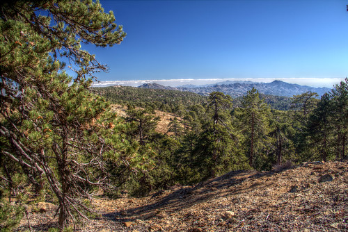 troodos troodosmountains hdr nature nationalpark hiking trail path cyprus outdoor forest mountain trees landscape