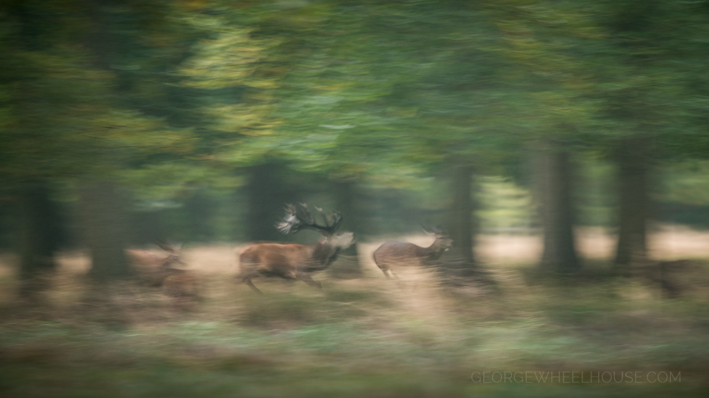 George Wheelhouse  Fine Art Nature Photography  Red Deer