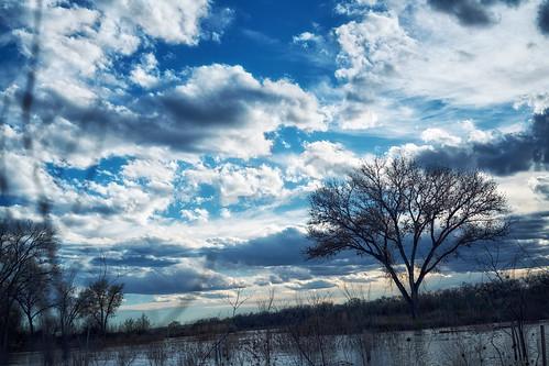 albuquerque newmexico riogrande sunset river tree sky sun