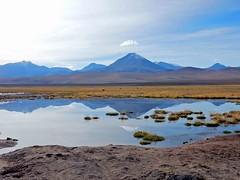 Tatio Geysir | Geysers | Vulcan | Vulkan | Anden | Andes