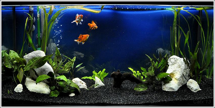Libros de peces y acuarios volumen 1 pdf descargar gratis for Peces para peceras pequenas agua fria