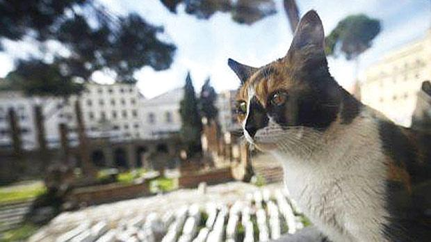toldo-gato-diarioecologia