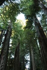 Redwood National Park 2013