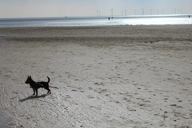 dog_on_crosby_beach