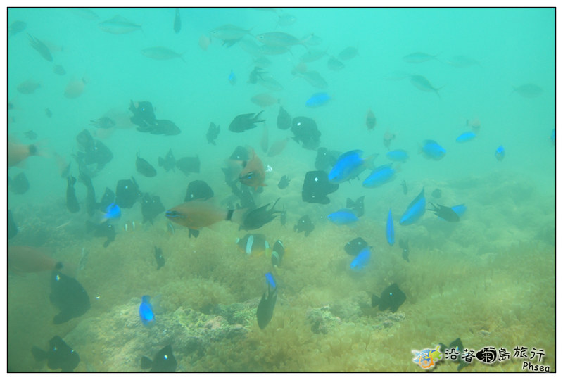 2013歐船長東海休閒漁業_97