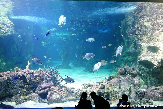 great barrier reef area in the aquarium