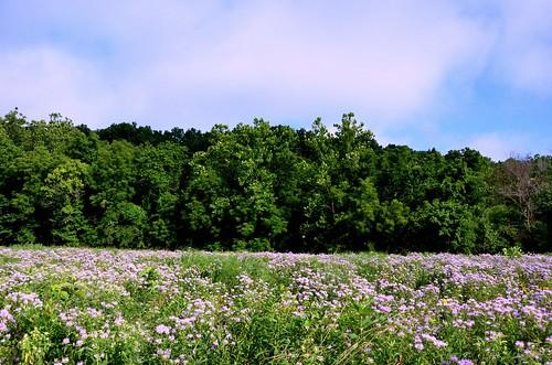 flowers nature beautiful landscape outdoors scenic missouri wildflowers ozarks fieldofflowers springfieldconservationnaturecenter fieldofwildflowers