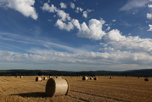 After The Harvest In Rathdrum