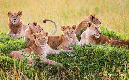 Kenia - Masai Mara 56