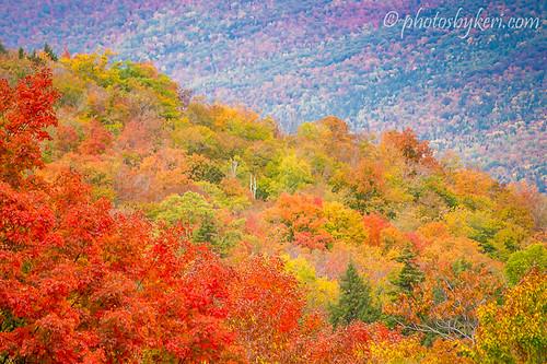 Rainbow of Foliage by KAM918