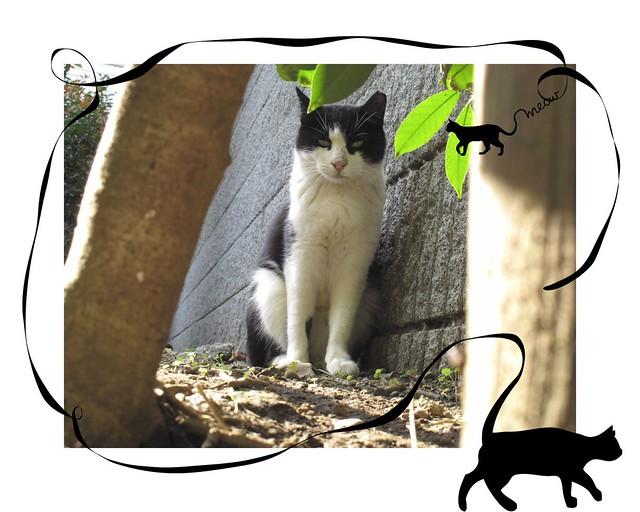 『cctzElysium〜石屋の猫3』の画像