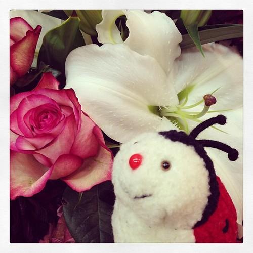 #plush ladybird